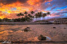 Coconut Palm Tree Sunset at Dubois Park Jupiter Florida