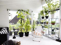 Agneta Enzell's Orangeri | Gardenista