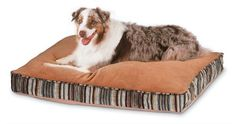 Petmate Microban Pet Bed Petmate Deluxe Pillow Bed with Microban, Gusseted Red/Gold Striped Chenille, 27 X big bed for big dogs! Pink Dog Beds, Pet Beds, Dog Pillow Bed, Bed Pillows, Plush Pillow, Orthopedic Dog Bed, Cool Dog Beds, Medium Sized Dogs, Pet Mat