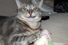 Hey human cats gonna rule the world someday haha http://ift.tt/2mKamYt