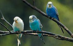 wild birds - Google Search