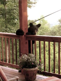Looks like my place in Arkansas.And, matter of fact, my place in California. Always followed by bears