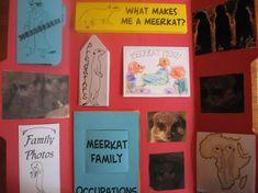 Free Meerkat Animal Study & Lapbook