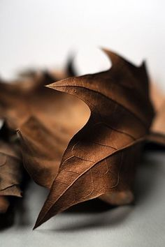 perfect autumn leaf
