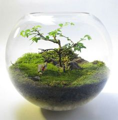 Bonsai Terrarium For Landscaping Miniature Inside The Jars 26