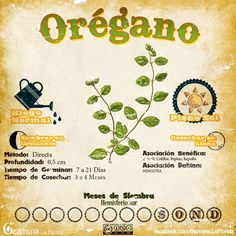 Organic gardening is the ideal way to grow a garden if you are concerned about harmful chemicals in your garden. Eco Garden, Garden Deco, Edible Garden, Garden Plants, Organic Plants, Organic Gardening, Gardening Tips, Container Gardening, Como Plantar Oregano