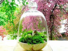 nice moss terrarium with bird  Could do something like this for Easter.