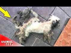 Sure You Won't Last Until The End of The Video,So Emotional That I Couldn't Do it-Animal Rescue - YouTube
