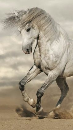 Horses horse care horse tips horse anatomy horse training horse pictures Most Beautiful Horses, Animals Beautiful, Cute Animals, Cute Horses, Pretty Horses, Horse Photos, Horse Pictures, Horse Anatomy, Andalusian Horse