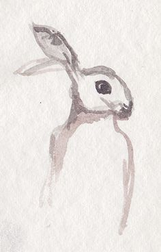Hase, hare drawing