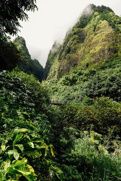 MAUI: QUICK GUIDE + PHOTO JOURNAL