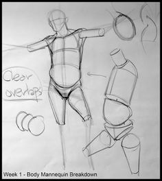The 91 best Human Anatomy Proportions images on Pinterest | Draw ...