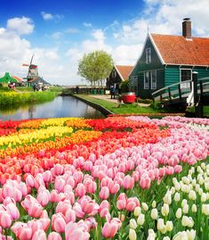 Photo of Zaanse Schans, one of the most iconic day trips from Amsterdam. Read insider tips from a resident on the 20 best day trips from Amsterdam! #Amsterdam #ZaanseSchans #Holland #Tulips #Netherlands #Travel #Europe