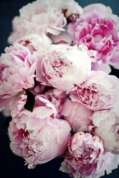 Blumen - Päonien, Peonies