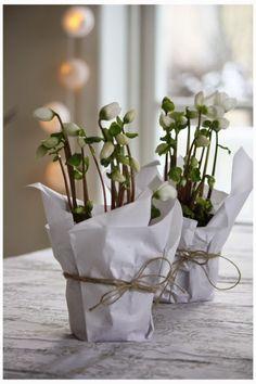 décoration florale de noel en blanc