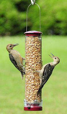 Bird Feeder Hanging Arm Bracket Support Holder Bird Safe Medium Oak