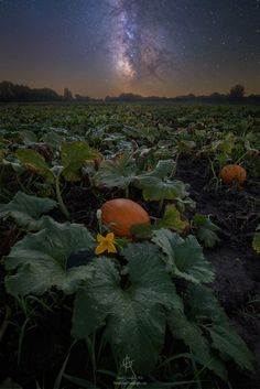 Night of the Pumpkin  Landscapes photo by AaronGroen http://rarme.com/?F9gZi