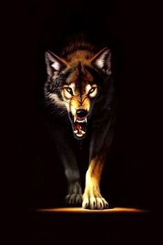 16 ideas for drawing animals wolf art Wolf Spirit, Spirit Animal, Beautiful Wolves, Animals Beautiful, Tier Wolf, Angry Wolf, Wolf Stuff, Wolf Wallpaper, Wallpaper Lockscreen