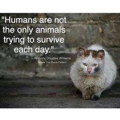"""""""""""Los humanos no son los únicos seres que están tratando de sobrevivir día con día..."""" From my dear friend @edita912_"""""""