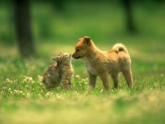 Brown Colour Beautiful cat and Dog