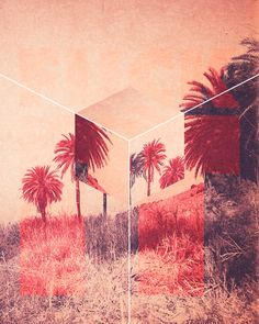 palm trees and geometry
