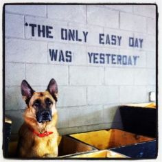 """""""The only easy day was yesterday"""" - wantttt this tatted on my back! Crossfit Inspiration, Life Inspiration, Fitness Inspiration, Crossfit Quotes, Corgi Mix, Easy Day, German Shepherd Dogs, German Shepherds, Diy Home"""