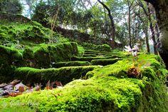 mystery path - Rhodes Island