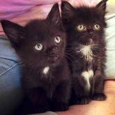 What Makes These Cats So Cute? - http://www.kittenswhiskers.com/what-makes-these-cats-so-cute/