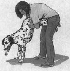 Kenntnisse der Maßnahmen in Erster Hilfe für den Hund, um im Ernstfall so souverän wie nur möglich reagieren zu können.