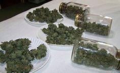 420stoneheads:    stoner herb weed 420 cannabis pot stuffmarijuana ganja grass