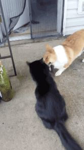 View More Funny Cat Gifs at: http://ift.tt/1SD6gr0