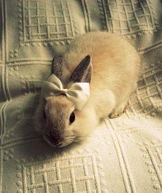 A very fashionable bunny