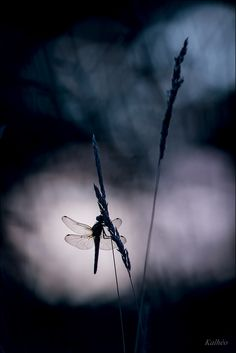 ♂ solo dragonfly silence nature Into the dark by florence Kalheo