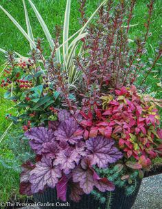 Fall container combination focused on Foliage FIRST!  http://fine-foliage.com/2014/09/30/container-design-with-an-autumn-attitude/