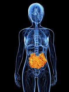 Gut microbes likely influence colon cancer susceptibility, says study that implanted embryos of cancer-prone rats into mothers with varying gut microbiota. Liver Cancer Symptoms, Colon Cancer, Kidney Cancer, Liver Disease, Celiac Disease, Home Remedies For Gerd, Cancer Fighting Foods, Scientific American, Insulin Resistance
