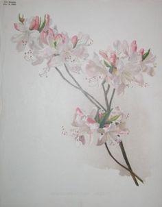 white flowers  no. - 04