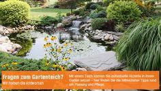Fragen zum Gartenteich? Der OBI Gartenteich-Berater hat Antworten für euch: http://www.obi.de/de/ratgeber/garten/gartenteich_berater/index.html