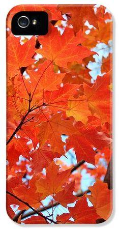 Under the Orange Maple Tree iPhone 5 Case / iPhone 5 Cover by Rona Black.  www.ronablack.com