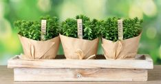 9 Awesome Foods That are Prefect for Your Indoor Garden