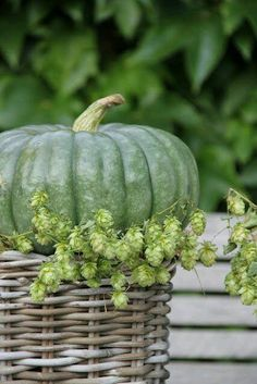 Fall for Autumn's Harvest - green pumpkin Green Pumpkin, Autumn Day, Fall Harvest, Autumn Inspiration, Thanksgiving Decorations, Fall Pumpkins, Fall Season, Gourds, Fall Halloween