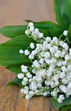 Green + white flowers
