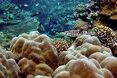 bahrain artificial reef