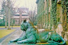 Tiger sculpture, Princeton, New Jersey