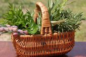 Healthy Living Bringing Narure's Goodness Home, Info on herbs, gardening, recipes and more.