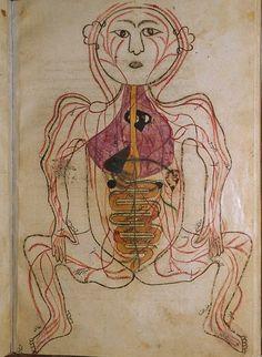 Mansur ibn Ilyas (fl. ca. 1390). Title: Tashrih-i badan-i insan. [Anatomy of the Human Body]. Anatomical <3