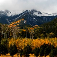Fall color in Flagstaff, AZ