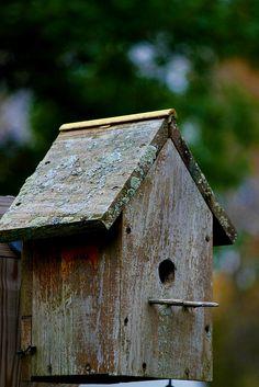 weathered bird house.