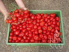 Vegetables, How To Make, Food, Tomatoes, Essen, Vegetable Recipes, Meals, Yemek, Veggies