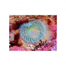"Emily Goodman Photography ""Neon Anemone"" I love this!!"