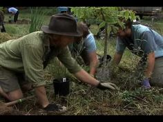 Permaculture - how to plant a guild  excellent resource